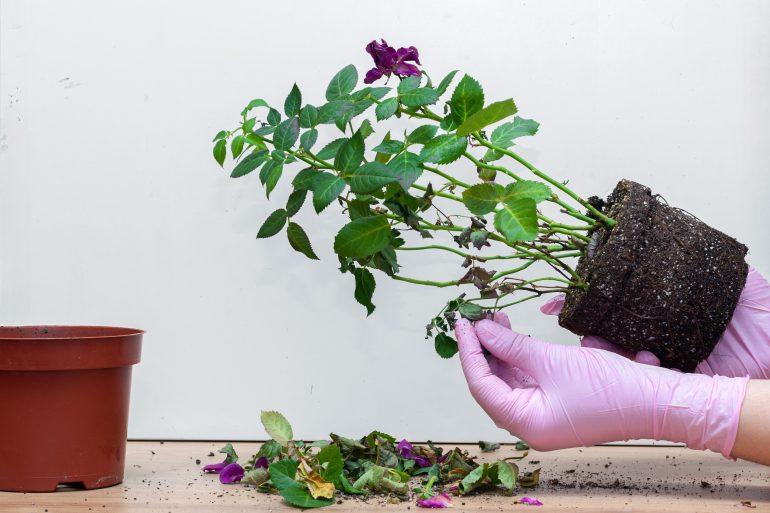 veelgemaakte fouten bij de verzorging van kamerplanten