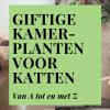 Giftige kamerplanten voor katten