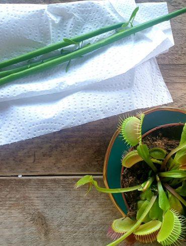 Potloodplantje vermeerderen stekken