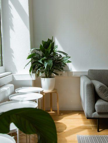 Planten voor volle zon en een hoge temperatuur