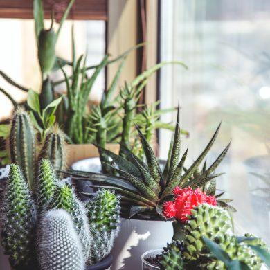 Een plantenasiel beginnen
