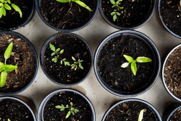 manieren om planten te vermeerderen