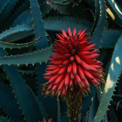 5 bijzondere vetplanten die je in huis moét hebben!
