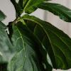 Lastige kamerplanten snel dood