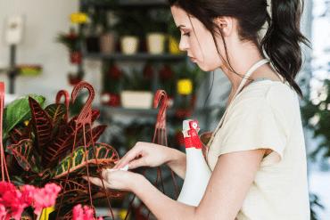Planten schoonmaken stof
