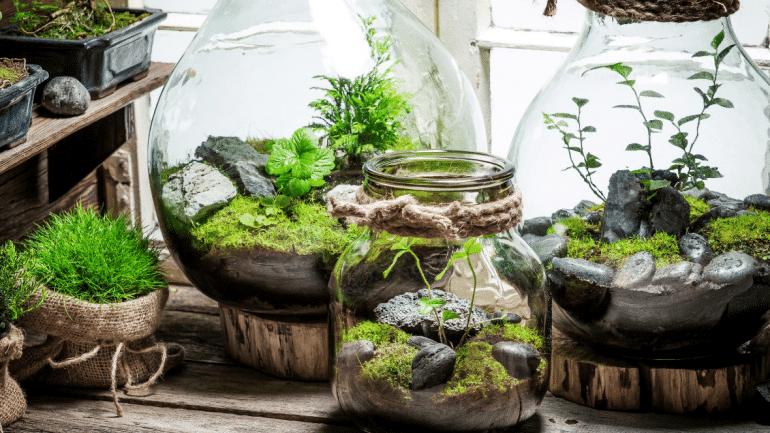 Planten terrarium ecocysteem gesloten
