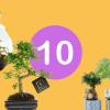 Top 10 kamerplanten augustus 2020