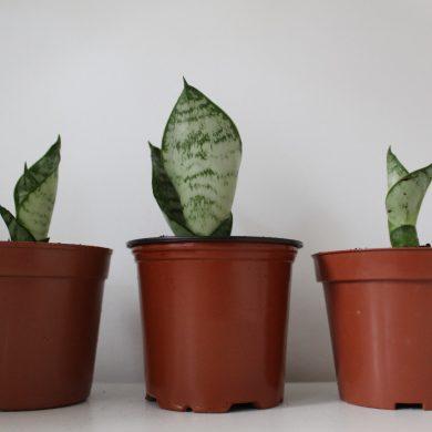 stekken van verschillende plantendelen