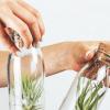 cadeaus voor plantenliefhebbers