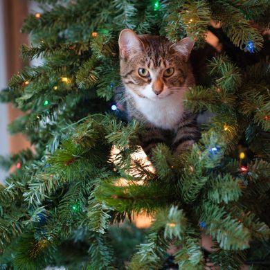 leukste kleine kerstboompjes