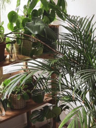 waar koop je de mooiste kunstplanten
