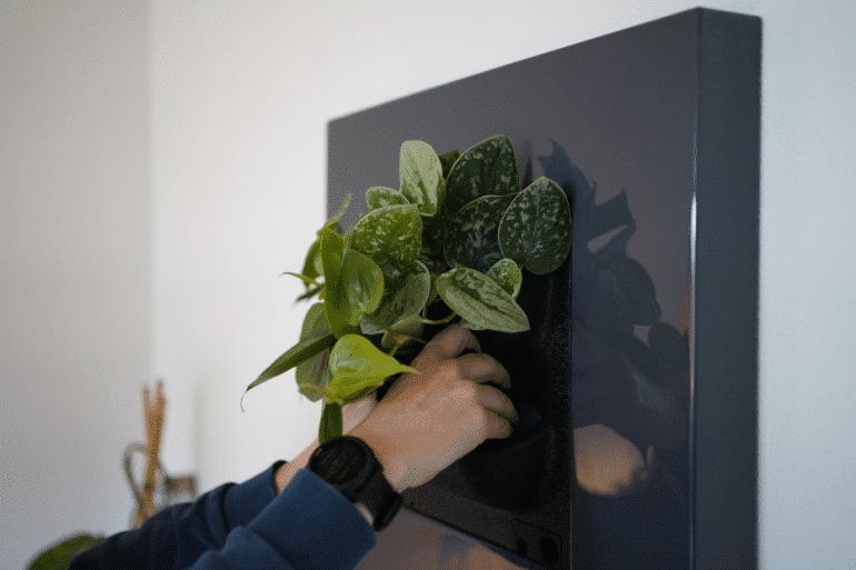 Levend-plantenschilderij_-Groene-kunst-in-huis