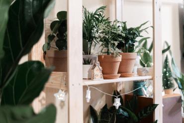 Planten en plantenbakken met korting bij Bol.com