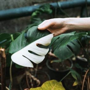Zeldzame kamerplanten: Zeldzame planten kopen